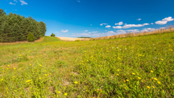 Summertime meadow under blue sky